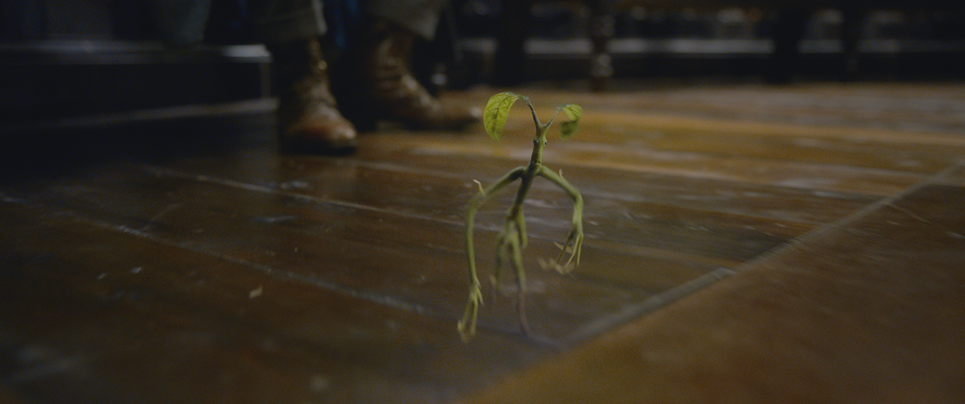 The Tree-dwelling Bowtruckle